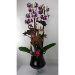 Terrine d'orchidées